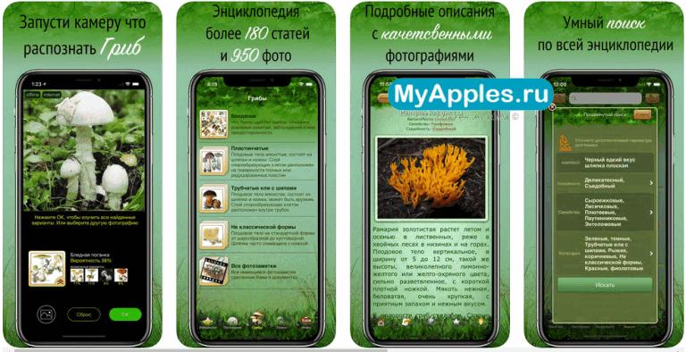 ТОП-6 необходимых приложений для грибников для iPhone